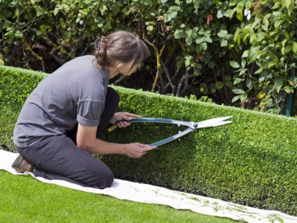 Truc et astuce de jardin : les conseils immanquables